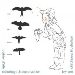 Colorear y observación