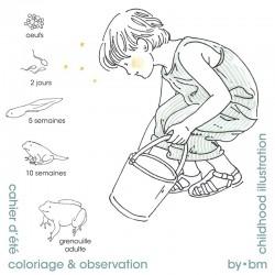 Colorear y observación 2