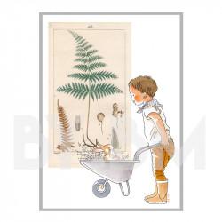 Botanique  - garçon